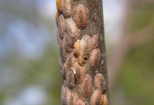 болезни, паразиты и другие причины, которые травмируют цветок базовые правила ухода за драценой